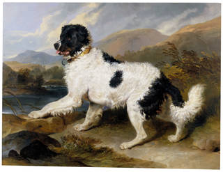 Photo of Lion - A Newfoundland Dog, Sir Edwin Landseer, 1824, England. Museum no. 852-1894. © Victoria and Albert Museum, London