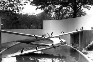 The Penguin Pool at London Zoo. Photograph by Frederick William Bond, 1934, UK. © ZSL