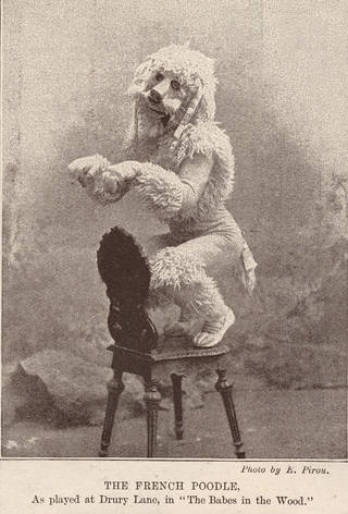 Charles Lauri as 'The French Poodle', The Sketch Magazine, 15 March 1893, England. Museum no. 131655. © Victoria and Albert Museum, London