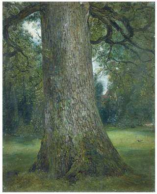 Photo of Study of the Trunk of an Elm Tree, John Constable, about 1821, England. Museum no. 786-1888. © Victoria and Albert Museum, London