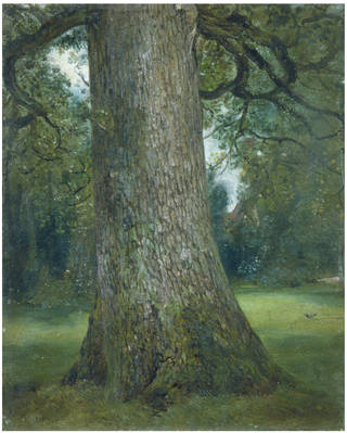 Study of the Trunk of an Elm Tree, oil painting, John Constable, about 1821, England. Museum no. 786-1888. © Victoria and Albert Museum, London