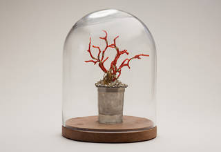 Rss tudor glass coral reef