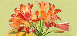 Plants, Flowers & iPad Art  photo