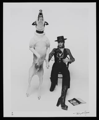 Photograph of David Bowie, Terry O'Neill, 1974, England. Museum no. E.315-2011. © Victoria and Albert Museum, London