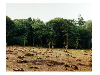 Gerhard Stromberg, Coppice (King's Wood), 1994. Museum no. E.585-2001. © Gerhard Stromberg