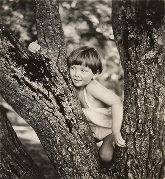 Young boy on a tree (custom print)