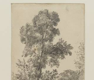 In Focus Tour: Trees in British Art photo