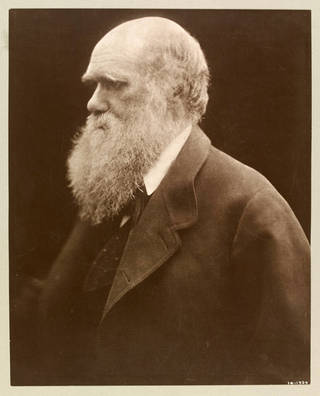 Charles Darwin, photograph, by Julia Margaret Cameron, 1868, printed 1875, England. Museum no. 14-1939. © Victoria and Albert Museum, London