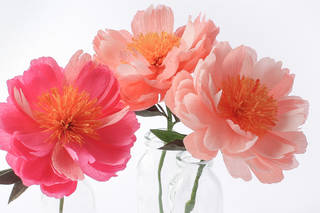 Fashioned from Nature: Paper Peonies photo
