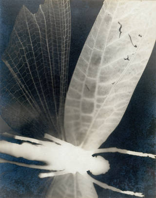 Photo of Abstract Composition, photograph by Curtis Moffat, about 1925. Museum no. E.880-2003. © Victoria and Albert Museum, London/Estate of Curtis Moffat