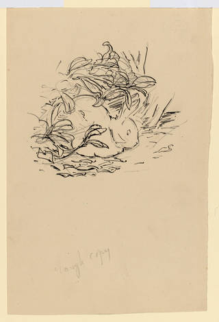 Preliminary drawing for the privately printed edition of The Tale of Peter Rabbit, by Beatrix Potter, 1901, pen and ink over pencil. Linder Collection cat. no. LC 22/B/4. © Victoria & Albert Museum, London, courtesy Frederick Warne & Co Ltd. and The Trustees of the Linder Collection