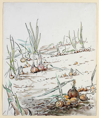 Sketch of an onion bed at Fawe Park, background study for The Tale of Benjamin Bunny, Beatrix Potter, 1903, watercolour and pen and ink. Museum no. BP.481(a), Linder Bequest cat. no. LB 798. © Victoria and Albert Museum, London, courtesy Frederick Warne & Co Ltd.
