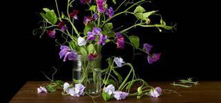 Botanical Photography photo