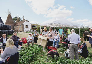 Community of people picking hops. Gazeebo, brown building with pointed roofs in background