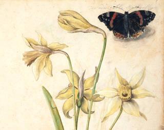 Renaissance Watercolours: from Dürer to Van Dyck photo