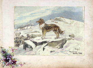 Sketch of Kep guarding sheep, by Beatrix Potter, 5 March 1909, watercolour and pencil on paper, mounted on card. Museum no. BP.297, Linder Bequest cat. no. LB 178. © Image courtesy Frederick Warne & Co Ltd.