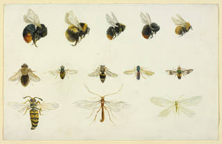 Studies of bees and other insects