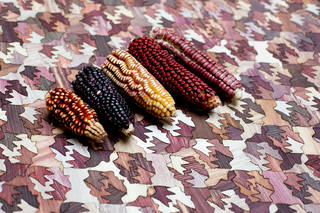 Five husks of corn. Varying colours - red, purple, yellow. On a wooden jigsaw-like surface of similar colours