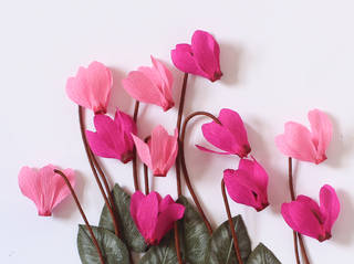 Paper Flowers: Christmas Cyclamen  photo