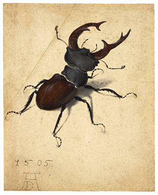 Watercolour of stag beetle