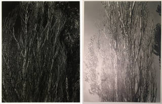 (Left to right:) 'Poplars, Lake George', photographs by Alfred Stieglitz, 1932, US. Museum nos. E.899-2003 & E.900-2003. © Victoria and Albert Museum, London;