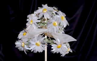 Hat of white organza daisies, designed by Aage Thaarup, 1965 – 69, England. Museum no. T.252-1985. © Victoria and Albert Museum, London
