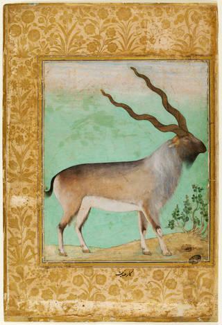 Painting, Himalayan wild goat