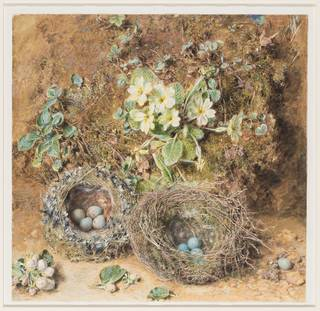 Painting of two birds' nests on the ground, against a mossy bank with primroses.