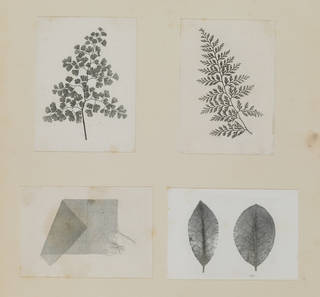Sheet of yellowing paper with photographic prints of four fern leaves and a piece of material in grey and black