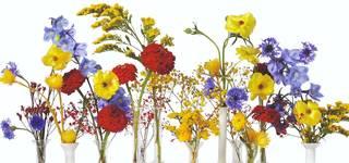 Online Talk: Putnam & Putnam: Flower Colour Theory photo