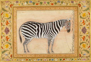 watercolour painting pf a zebra on a pale background surrounded by a floral border.
